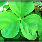 LUCK OF THE IRISH! by Claire Moreau