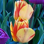 Tulips by MCloutier85