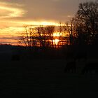 Grazing Evening by Mechelep