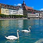 Lucerne by Dean Cunningham