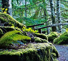 Green path, at the back of power station Newhalem  WA USA by Uri Z. Fogel