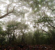 Mist - Fei Ngo Shan, Hong Kong by Alfred Tang