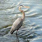Big Bird Posing by Carolyn  Fletcher