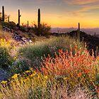 Desert Glow by Tracy Riddell