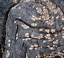 Dinosaura Petroglyph  by Carla Wick/Jandelle Petters