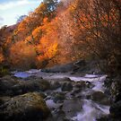 Autumn Glen by Colin Bamford