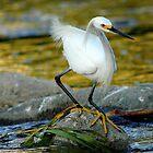 Los Angeles River Wildlife by Rob  Stanard