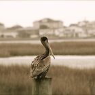 Saltwater Marsh Sentry by Edith Reynolds