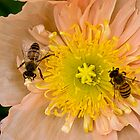 Happy bees by Celeste Mookherjee