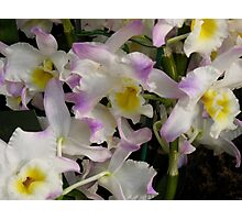 Pastel Fantasy Orchids Photographic Print