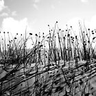 Desert Flowers in B&W by Candice84