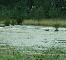 Floods at Yea, Victoria 27_02_2912 by warmonger62