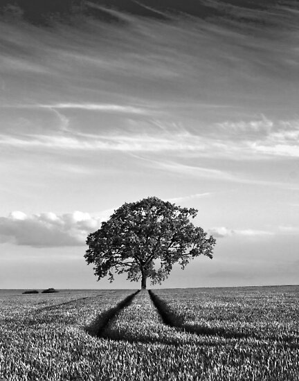 Tree Tracks by Geoff Carpenter