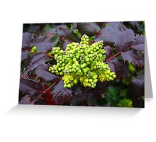 Holly, Cabbage  Greeting Card