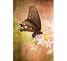 Spring Pastel Photographic Print