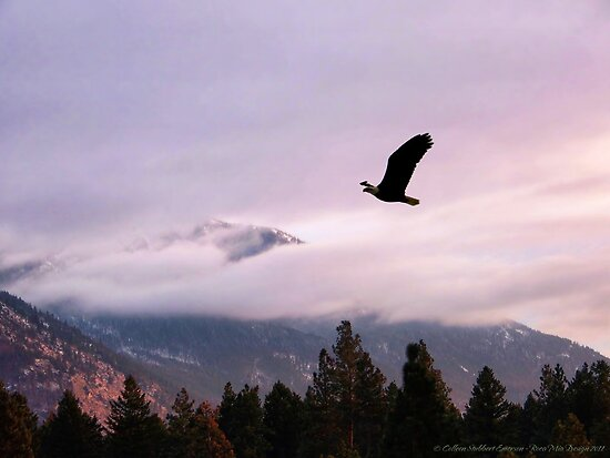 On Wings of Eagles by rocamiadesign