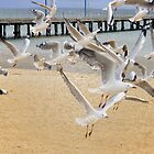 Seagulls in flight by Carmel Abblitt