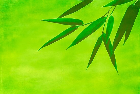 bamboo leaves by hannes cmarits