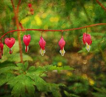 Natures Heart by Terrie Taylor
