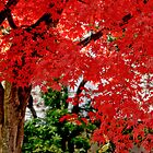 Essence of Japanese Maple Tree by Carol F. Austin