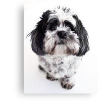 Max is alive and very cute! Canvas Print
