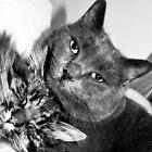 Kitty Buddies by Laura Godden