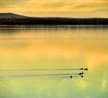 A Quick Swim by Carolyn  Fletcher
