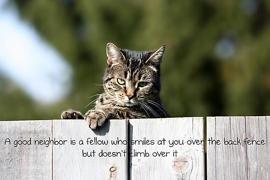 A Good Neighbor by AngieBanta