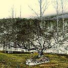 Stones & Trees by Annlynn Ward