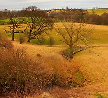 February Landscape along the River Tees, North East England by Ian Alex Blease