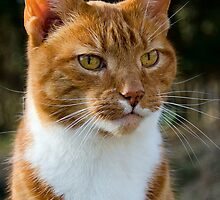 Ginger Kitty ~ Mangerton Mill by Susie Peek
