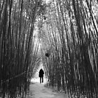 evergreen by Misha Dontsov
