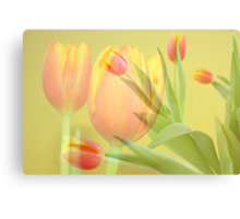 Tulip Time Canvas Print
