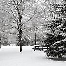 Winter Wonderland in March by anchorsofhope