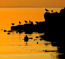 Sunset Silhouette by Garth Smith