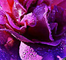 Purple Rain by Morag Bates