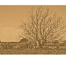 lithographic tree Photographic Print