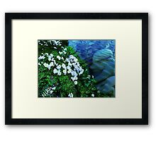 Sea Angel Framed Print