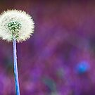 Purple Dandelion by Natalie Durell