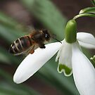 Bee-ing happy by Rivendell7