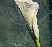 Calla by Natalie Durell