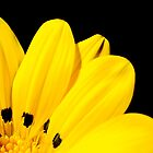 Yellow Flower 2 by rudolfh