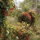 Coral Vine by Eve Parry