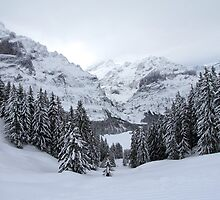 Grindelwald, Switzerland by Jeremy Harrington
