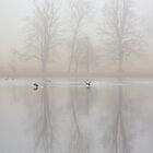 Coots on a lake in the fog by BeardyGit