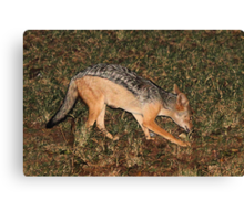 Side Striped Jackal at Night Canvas Print