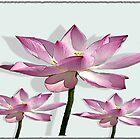 Lilies by iggys