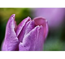 Peaceful Purple... Photographic Print