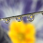 Needle drops by Lyn Evans