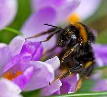 Bumbling Around by James Girdler
